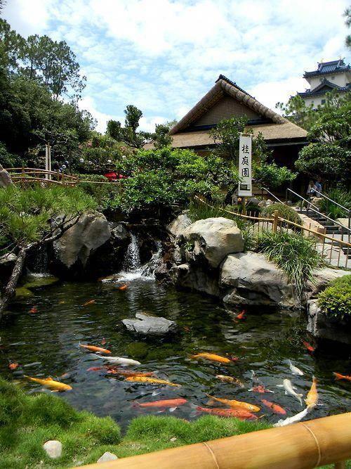 Nuôi cá Koi sân vườn tiểu cảnh