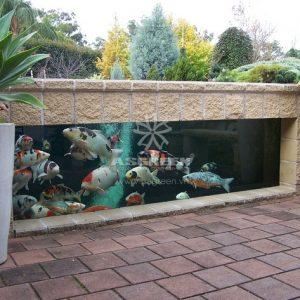 Mẫu hồ cá Koi hiện đại 12