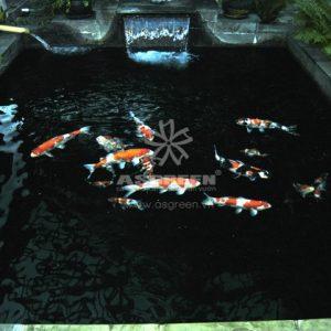 Mẫu hồ cá Koi hiện đại 22