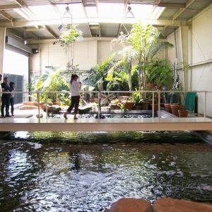 Mẫu hồ cá Koi hiện đại 39