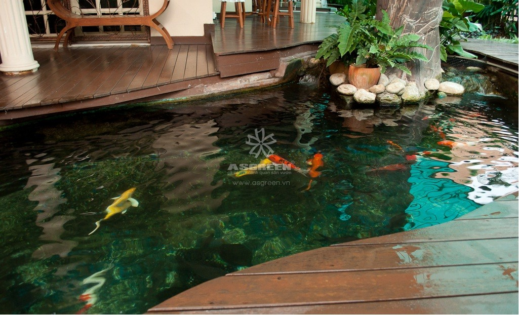 Mẫu Hồ Cá Koi Hiện đại