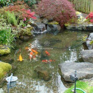 Mẫu hồ cá Koi truyền thống Nhật Bản 34