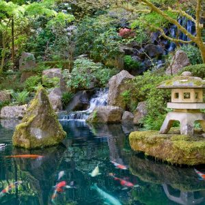 Mẫu hồ cá Koi truyền thống Nhật Bản 35