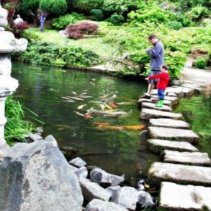 Mẫu hồ cá Koi truyền thống Nhật Bản 4