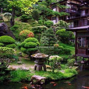 Mẫu hồ cá Koi truyền thống Nhật Bản 7