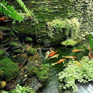 Mẫu hồ cá Koi truyền thống Nhật Bản 8