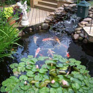Mẫu hồ cá Koi truyền thống Nhật Bản 11