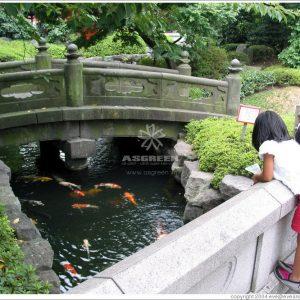 Mẫu hồ cá Koi truyền thống Nhật Bản 15