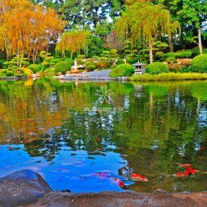 Mẫu hồ cá Koi truyền thống Nhật Bản 18