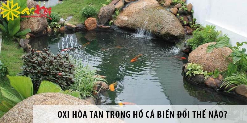 Oxi Hòa Tan Trong Hồ Cá Biến đổi Thế Nào?