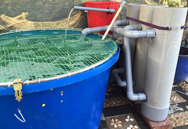 tank-nhua-tron-nuoi-duong-ca-koi-8 Tank nhựa hình tròn nuôi dưỡng cá Koi