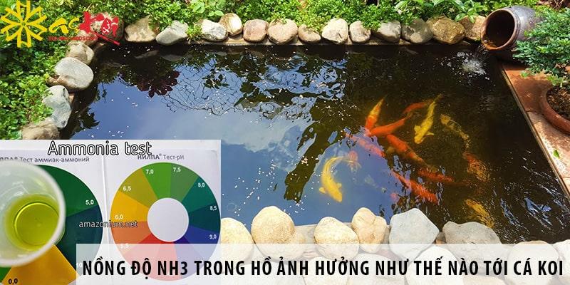 Nồng độ NH3 Trong Hồ ảnh Hưởng Như Thế Nào Tới Cá Koi?
