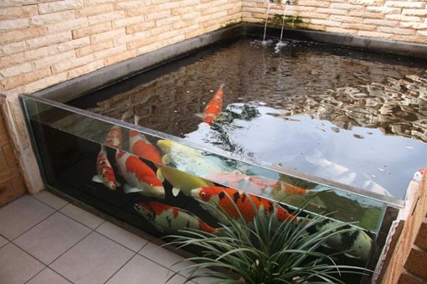 Hồ cá koi kính nên được làm từ kính cường lực
