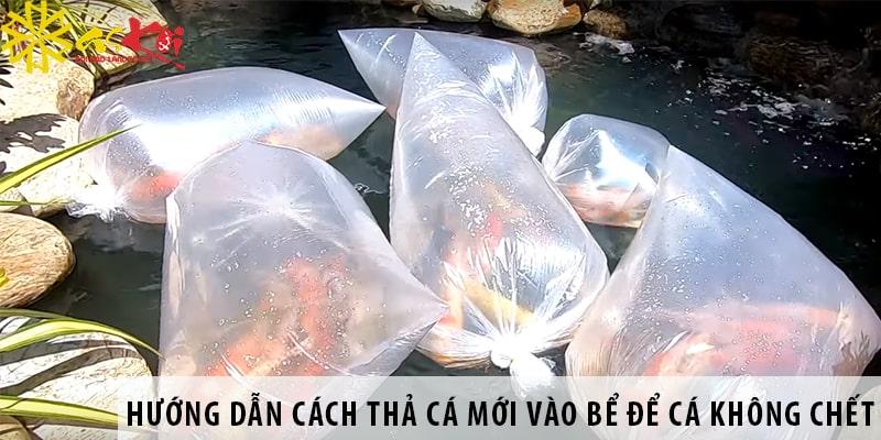 Hướng Dẫn Cách Thả Cá Mới Vào Bể để Cá Không Chết