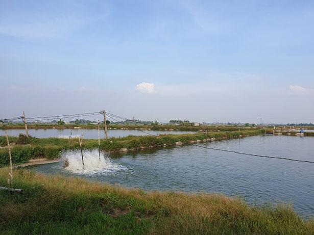 Ao Cá Koi Tại Trang Trại Askoi Farm