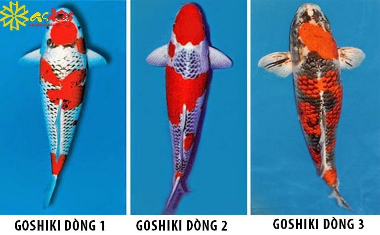 Phân loại cá Koi Goshiki