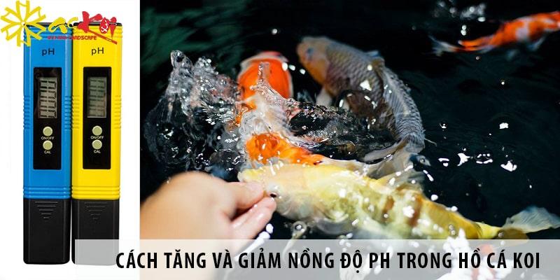 Cách Tăng Và Giảm Nồng độ PH Trong Hồ Cá Koi