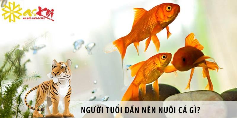 Người Tuổi Dần Nên Nuôi Loại Cá Gì? Hướng đặt Bể Cá