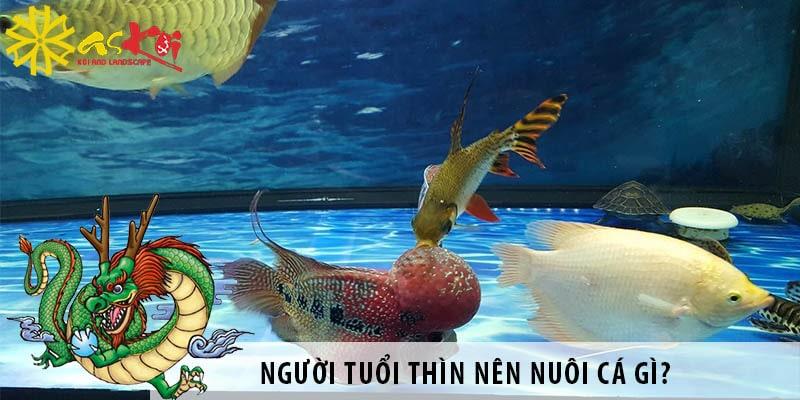 Người Tuổi Thìn Nên Nuôi Cá Gì? Nuôi Cá Có Tốt Không?