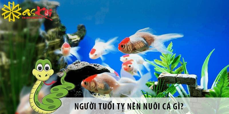 Người Tuổi Tỵ Nên Nuôi Cá Gì Hợp Phong Thủy?