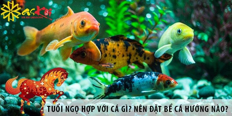 Tuổi Ngọ Hợp Với Loại Cá Gì? Nên đặt Bể Cá Hướng Nào?