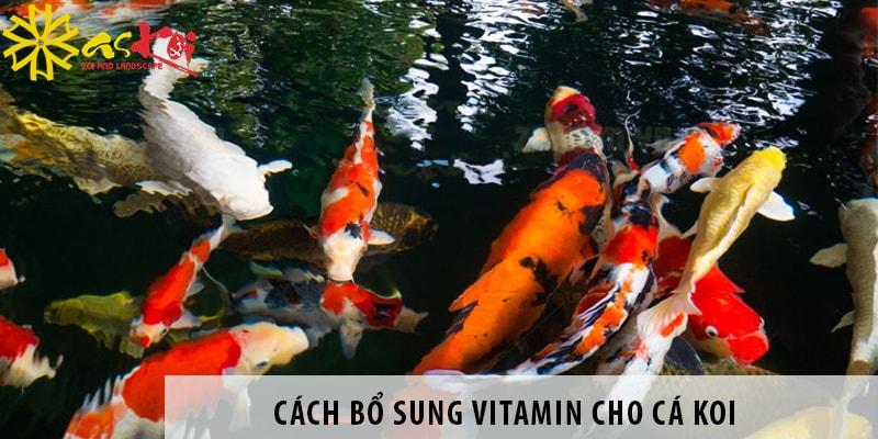 Cách Bổ Sung Vitamin Cho Cá Koi Giúp Cá Khỏe Mạnh
