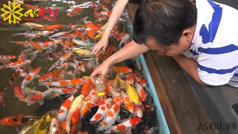 Cách để cá quen với mùi tay người