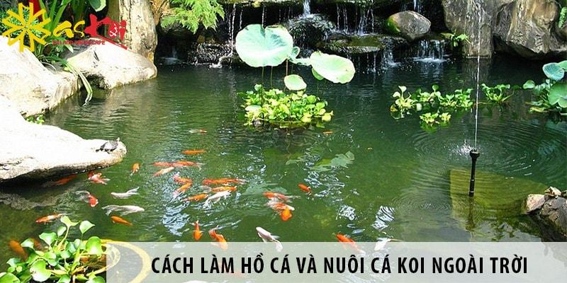 Cách Làm Hồ Cá Và Nuôi Cá Koi Ngoài Trời