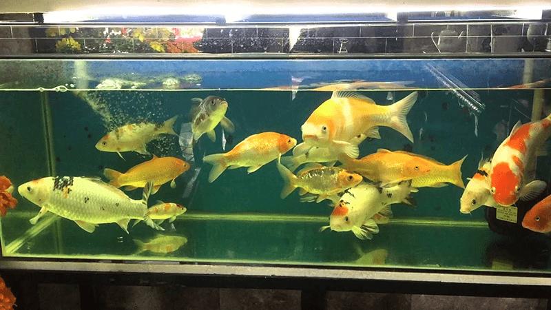 Bể cá nên được đặt ở nơi thoáng mát