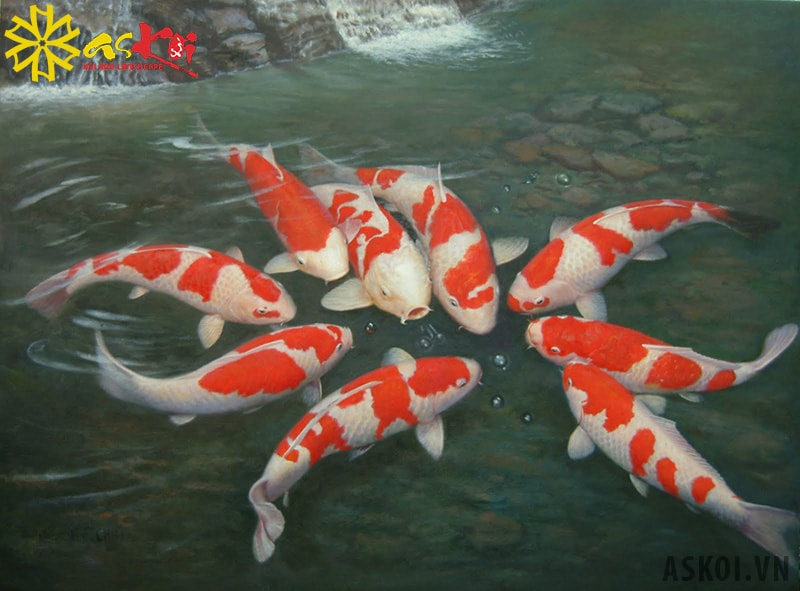 Cho muối vào bể cá đúng liều lượng giúp cá khỏe mạnh hơn