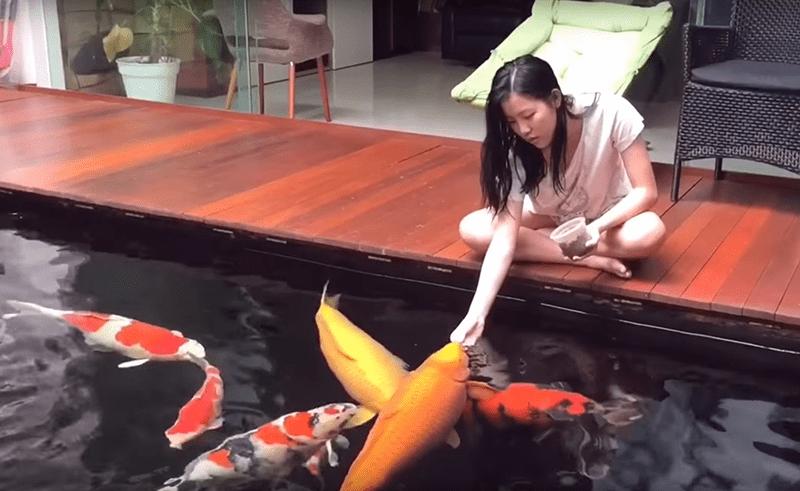 Tập cho cá ăn bằng tay giúp cá dạn người hơn