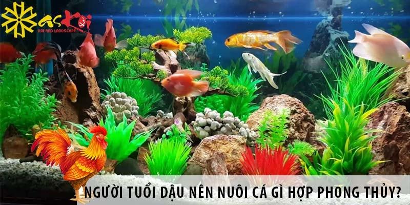 Người Tuổi Dậu Nên Nuôi Cá Gì Hợp Phong Thủy?