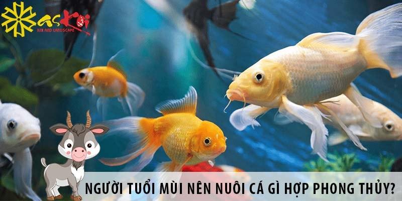 Người Tuổi Mùi Nên Nuôi Cá Gì Hợp Phong Thủy?