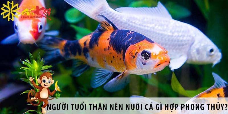 Người Tuổi Thân Nên Nuôi Cá Gì để Hợp Phong Thủy?