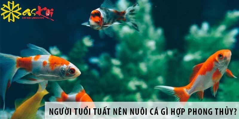 Người Tuổi Tuất Nên Nuôi Loại Cá Gì Hợp Phong Thủy?