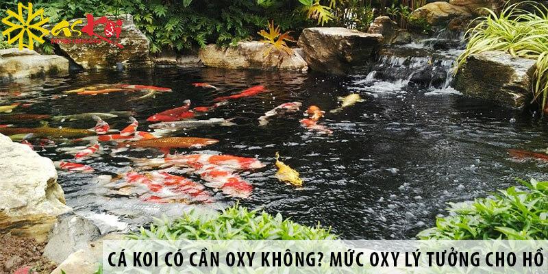 Cá Koi Có Cần Oxy Không? Mức Oxy Lý Tưởng Cho Hồ Cá Koi?