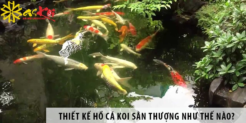 Thiết Kế Hồ Cá Koi Sân Thượng Như Thế Nào?